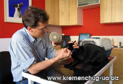 Ветеринарная лечебница в Кременчуге