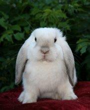 Питомник декоративных кроликов Изумрудная роща в Кременчуге